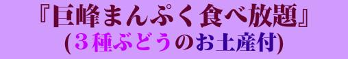 巨峰まんぷく食べ放題(3種ぶどうのお土産付)