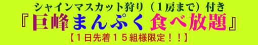 巨峰まんぷく食べ放題(シャインマスカット狩り1房まで)
